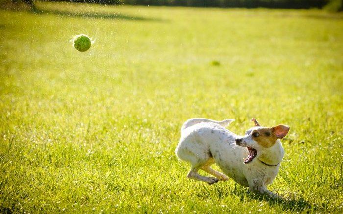 dog-1367297_960_720