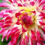 Bien choisir les plantes de son jardin