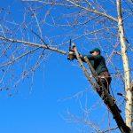 Que faut-il savoir sur l'élagage d'arbre ?