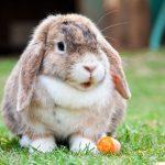 Comment choisir la cage de son lapin nain ?