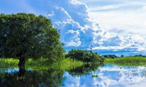 Le pantanal au Brésil