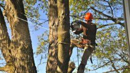 Elagage-arbre-elagueur