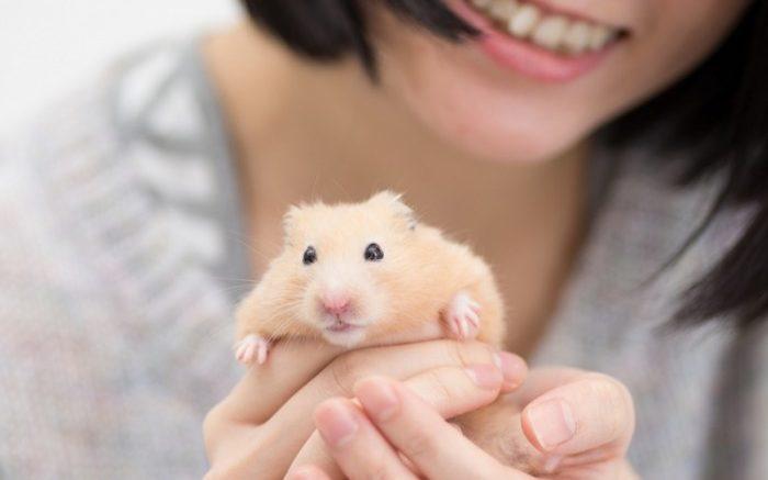 Ce que vous devez savoir sur la souris domestique
