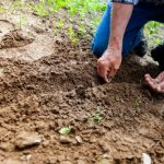 Barrière anti-rhizome : halte aux racines envahissantes