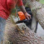 Combien coûte l'élagage d'un arbre ?