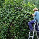 Les techniques d'entretien des arbres fruitiers