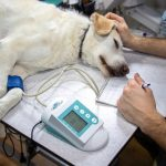 Quel est l'importance d'une assurance pour animaux ?