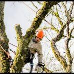 Conseils pour réussir les travaux d'élagage d'arbre