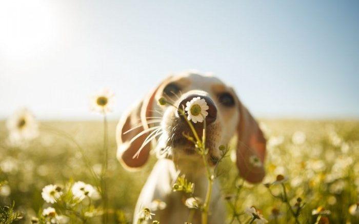 chien nature