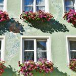 Quelles fleurs choisir pour une jardinière d'été ?