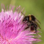 Enfumoir pour ruche: comment l'utiliser?