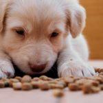Evolution de l'alimentation d'un chien au long de sa vie?