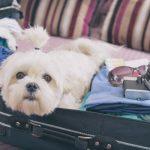 Les meilleures options pour voyager avec votre chien