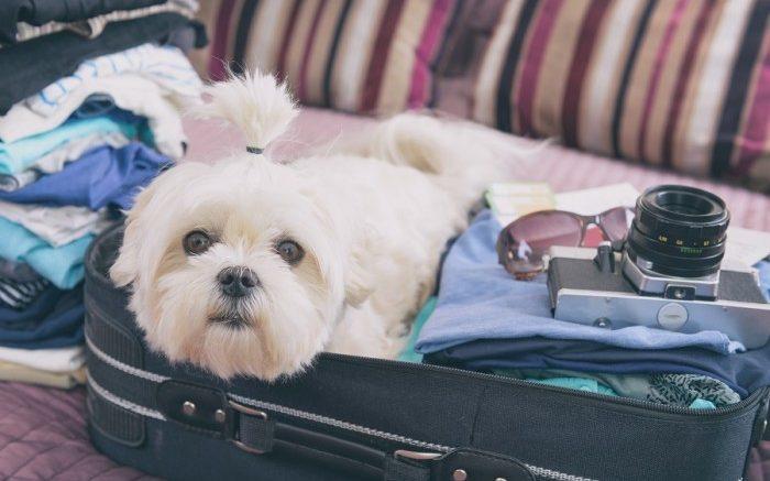 Départ en voyage les meilleures options pour voyager avec votre chien